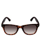 Cardon Tiger Brown Wayfarer Sunglass - By