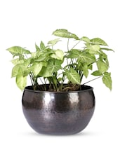 U-shaped  Iron Textured Planter - Magnolia Kreations