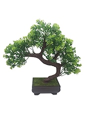 Random Bent Bonsai Tree with Green Leaves and Green Flowers -  online shopping for Indoor Plants