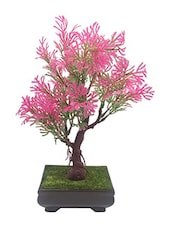 Random 3 Branched Bonsai Tree with Purple and Green Leaves -  online shopping for Indoor Plants