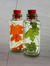 Fancy Decoration Bottles - PROP IT UP
