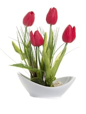 Red Rose  Buds With White Ceramic Platter - Fennel