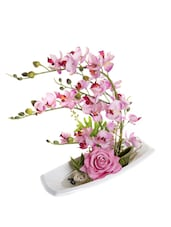 Pink Orchid Flowers In Ceramic Tray - Fennel