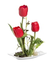Red Rose Decorative Flowers With Ceramic Pot - Fennel