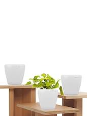 Pack Of 3 White Planters - Yuccabe Italia