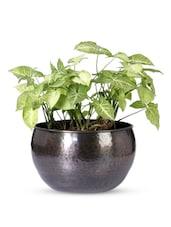 Solid Color Textured Iron U-shape Planter - Magnolia Kreations