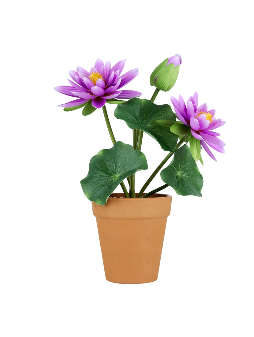 c845ed05e548f Buy Wonderland Lotus Flower Pot In Purple & White ( Set Of 2) for Unisex  from Gradina Dekor for ₹807 at 60% off | 2019 Limeroad.com