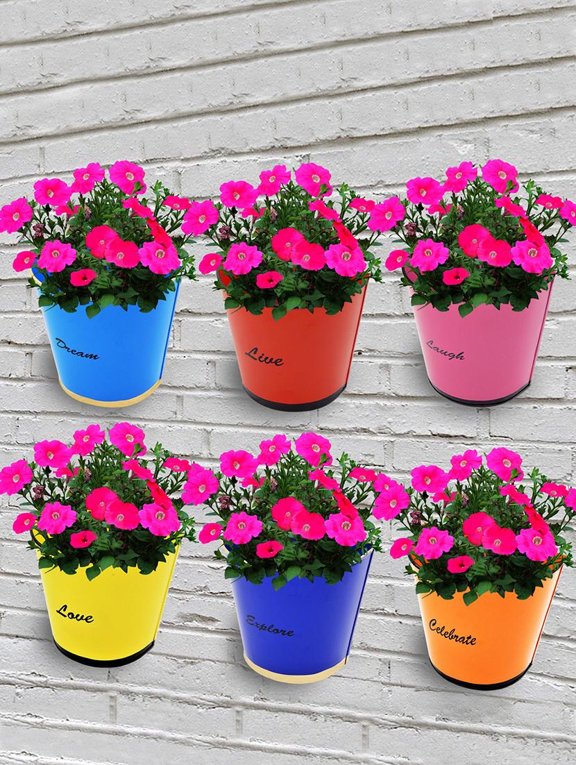 Buy Ecofynd Florid Modern Wall Mount Metal Planter Color