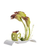 Brown-Green Assorted Plant With Designer Ceramic Tray - Fennel